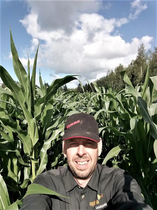 Maissi oli kasvanut korjuuhetkellä 2,5-metriseksi Lannäslundin maataloustuotannon Peter Isakaksen ja opiskelijoiden iloksi.