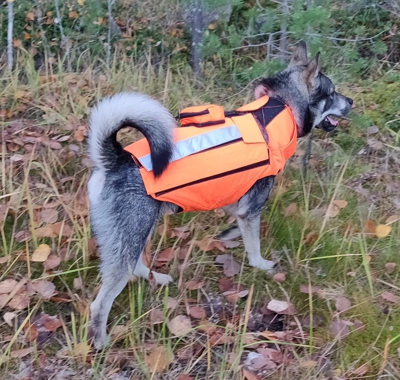 Noviisin Köpi testasi susiliivin toimivuutta vain muutamaa päivää ennen hyökkäystä.