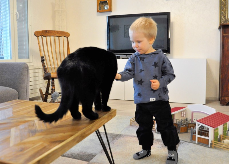 Onnea! Aaron Alfred Hakunti tarjoaa herkkuja Lalli-kissalle. Takana oleva hevostalli on yksi eläinrakkaan pojan suosikkileluista.