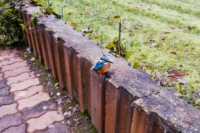 Harvinainen kuningaskalastaja keräsi lintuharrastajat Malisjoen varteen sunnuntaina.