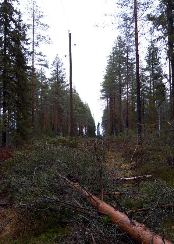 Linjalle kaatunut mänty pimensi Saviselän kylän viideksitoista tunniksi.