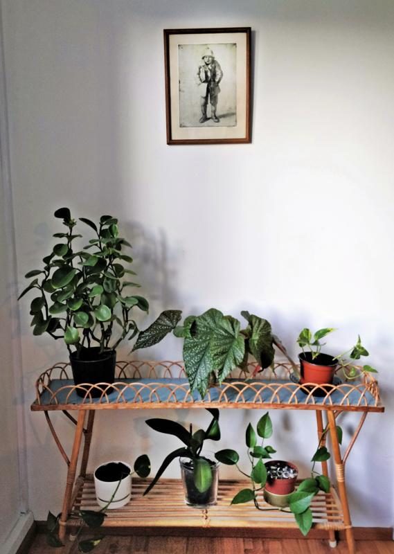 Viherkasvit luovat lämpöä ja eloisuutta. Rottinkisen kukkahyllyn yläpuolella Hilda Flodinin grafiikkaa.
