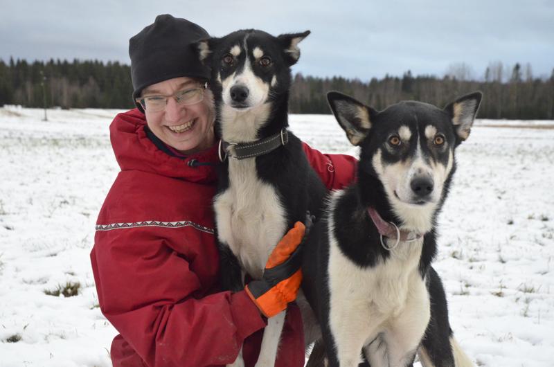 Alaskanhuskyt Cindy ja Manta tulevat mielellään emäntänsä Maria Juhalan syliin asti, vaikka ne eivät varsinaisia seurakoiria olekaan.