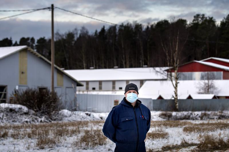 Kälviäläinen turkistuottaja ja Saga Fursin hallituksen puheenjohtaja Jari Isosaari.