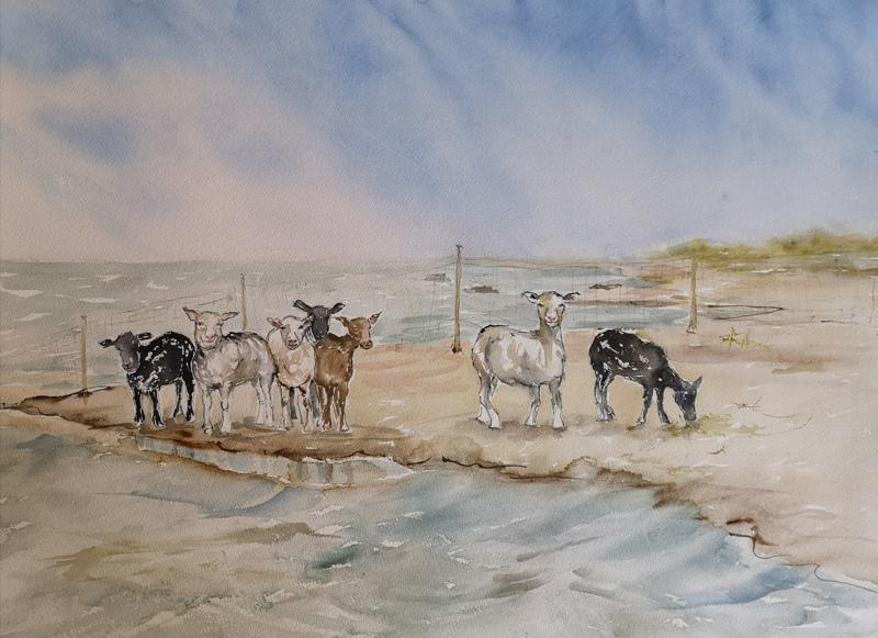 Kesälaitumella. Vattajalla kuvatut lampaat pääsivät maalauksen aiheeksi.