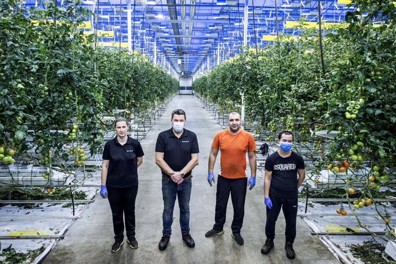Tomaatinviljely on tuonut Zlata Muslicin, Börje Ivarsin, Nermin Etemovicin ja Le Ngoc Hungin yhteen. Närpiöläinen Bigron kasvihuone  tuottaa kolme miljoonaa kiloa tomaattia vuodessa.