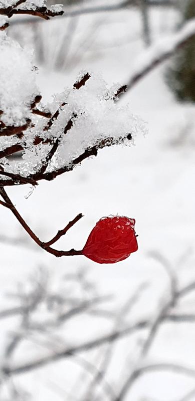 Väripilkku lumen keskellä.