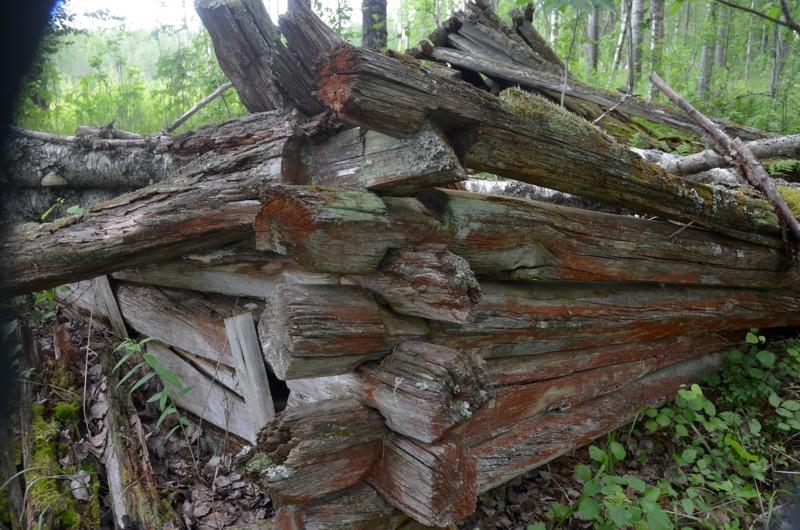 Metsäkaartilaisten asuinsijan rauniot ovat vielä paikallaan, vaikka hirret ovat luhistuneet kasaan.