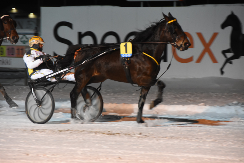 Lapinlahden tamma Express Eve voitti vuoden ensimmäisen ravilähdön Kaustisella. Jukka-Pekka Kauhanen ohjasti.