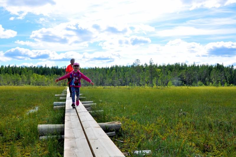 Yksi Salamajärven kansallispuistossa viime kesänä kunnostetuista kohteista oli Vasan kierros, joka on lapsiretkeilijöille sopiva rengasreitti.