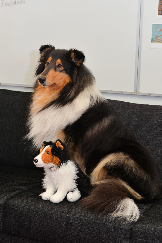 Kun Kerttu on vapaalla, häntä tuuraa koulussa pikku-Kerttu. Pikku-Kertulla opetellaan myös sitä, miten koiraa kosketetaan oikein.