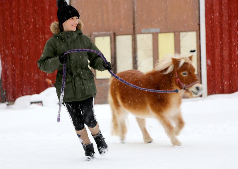 Aurelia juoksuttaa Bambia. Bambi on hevosista pienempi ja se, joka tekee enemmän jekkuja.