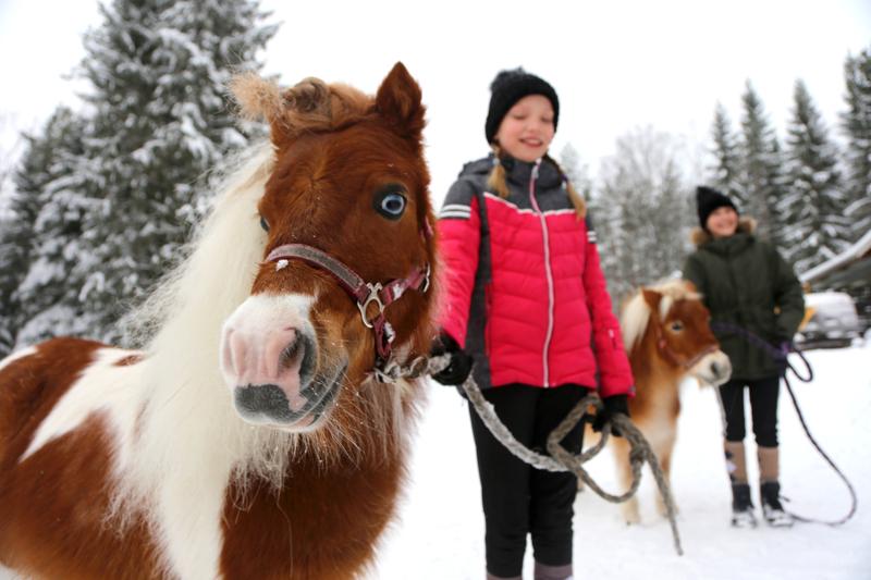 Olivia (vas.) ja Aurelia hoitavat miniatyyrihevosiaan Gemmaa ja Bambia. Hevoset ovat syntyneet Hollannissa, mutta matkanneet Suomeen varsoina. Nyt ne ovat kotiutuneet Perhoon.