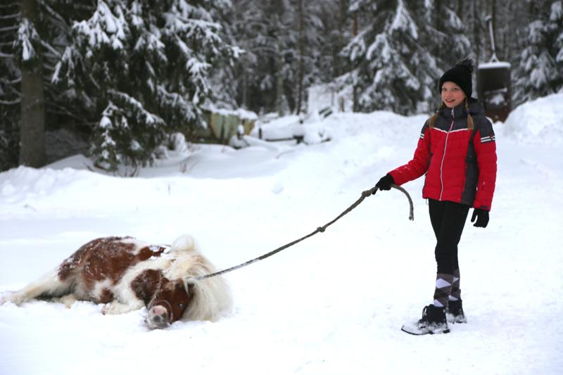Gemma kyllästyi poseeraamiseen ja piehtaroi lumessa.