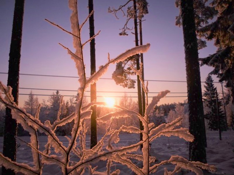 Tammikuun luonto kauneimmillaan.