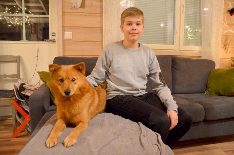 Oliver Ylikosken kesällä ampuma SM-pronssi oli ensimmäinen Nivalan Urheilijoiden edustajan saavuttama haulikkolajien SM-mitali. Arkistokuvassa myös suomenpystykorva Päti.