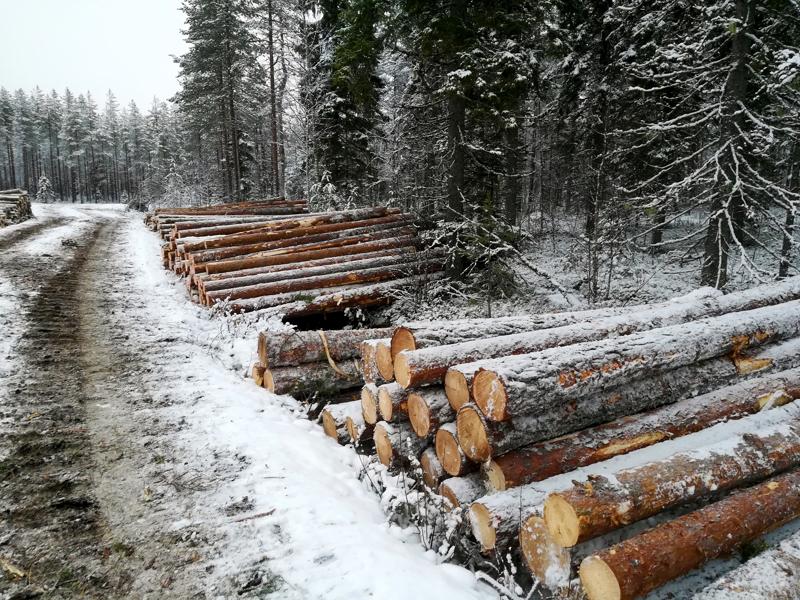 Metsänhoitoyhdistys Pyhä-Kalan johtaja Maunu Kilpivaara muistutaa, että metsät eivät ole menneet koronasta huolimatta kiinni, vaan sahat ja tehtaat tarvitsevat puuta.