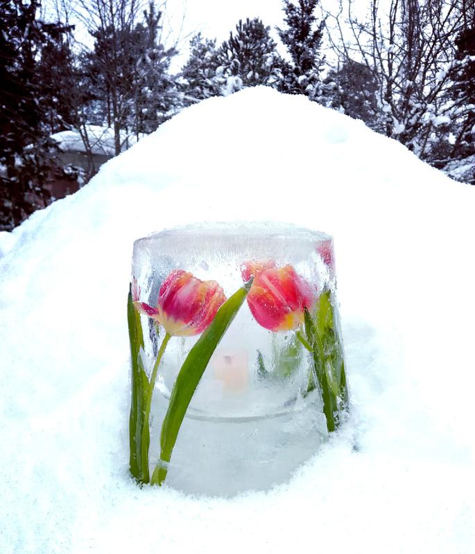 Kevättä odotellessa.