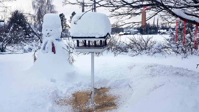 Lunta on Toholammillakin noin puoli metriä. Lumiukko ja lintulauta ovat saaneet komean hatun.