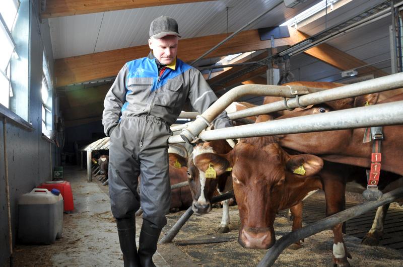 Arsi Kanala ja tilan paras lypsäjä Meri, joka tuottaa noin 14 000 litraa maitoa vuodessa.
