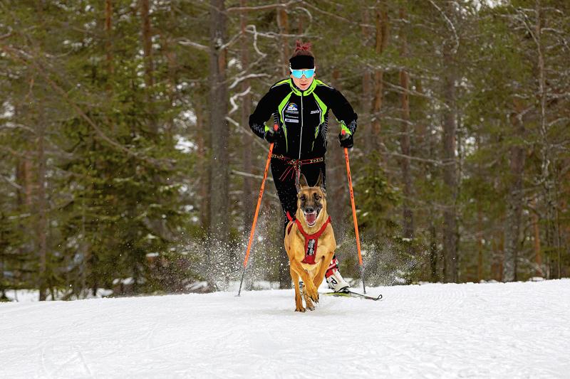 Tellervo Ranto ja Rosi voittivat uran kuudennen Suomen mestaruuden Kontiolahdella lauantaina. Arkistokuva.