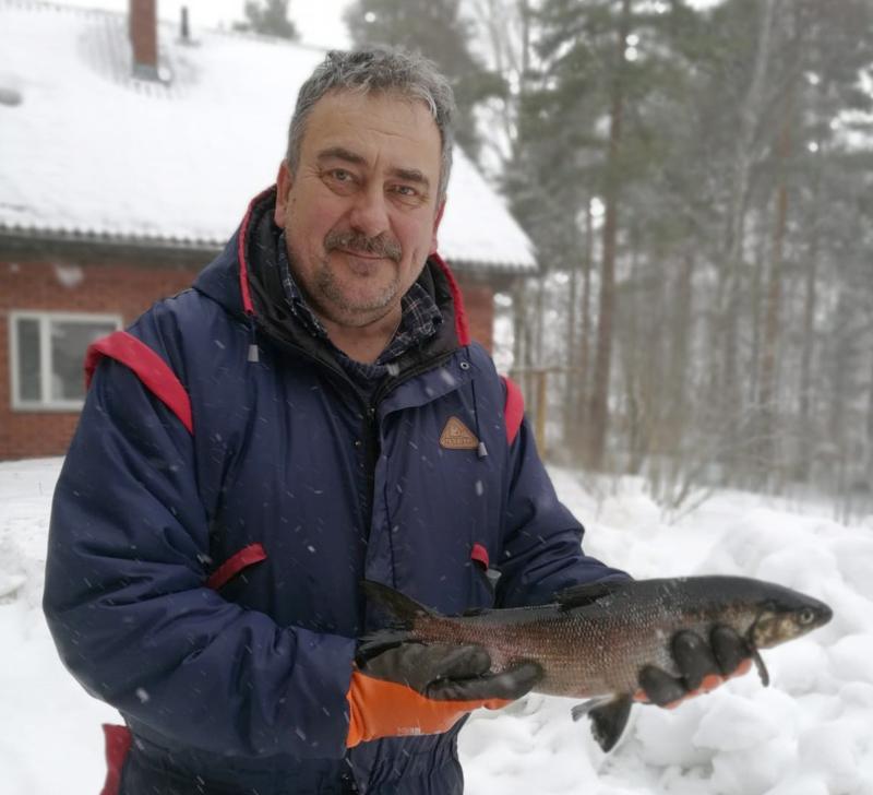 Kaksi yllätystä. Lestijärveläinen Jorma Koski-Vähälä sai viime viikolla verkoillaan  kaksi hyvänkokoista siikaa. Se yllätti kalastajan niin kuin monet muutkin. Tällä viime lauantain saaliilla oli painoa 1,1 kiloa ja pituutta 50 senttimetriä.