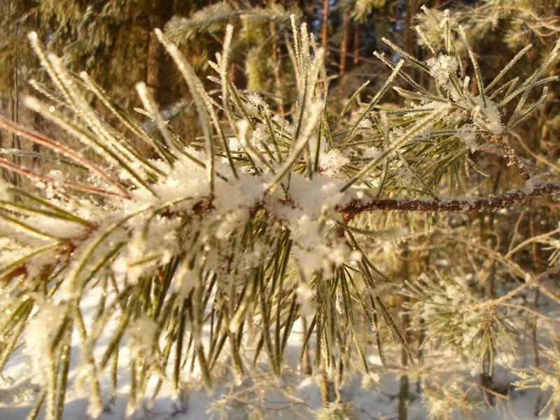 """Luminen """"kukka"""" kauneimmillaan."""