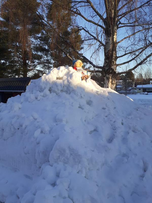 Nalle oli kiivennyt lumikasan päälle ja sai aurinkoa ennen kuin me tasamaan tallaajat.