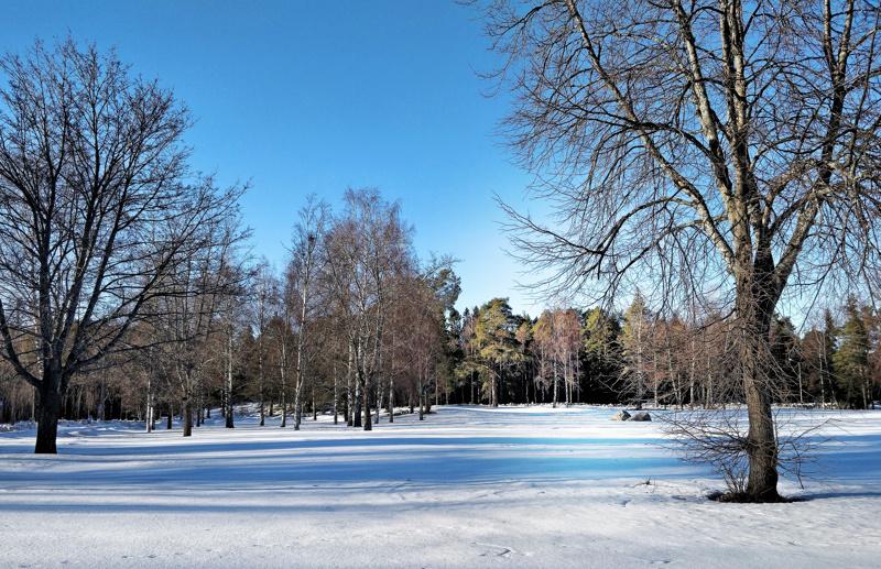 Näkymä tontilla maaliskuussa 2019. Pursisalmi oli aikoinaan yksi Suomen kokeiluperuskouluista.