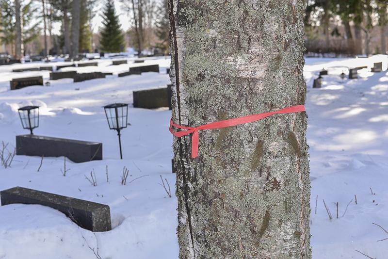 Säiden rajusta vaihtelusta pakkasesta suojasäähän ja takaisin on monelle puuvanhukselle kohtalokasta.  -Puut halkeavat, mikä edistää niiden lahoamista entisestään, Raimo Junnikkala kertoo.