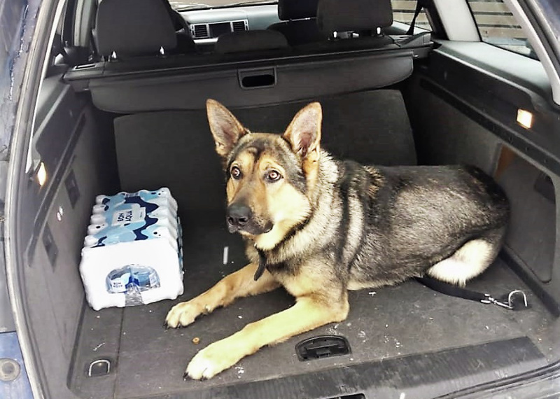 ...ja henkilöautossa kaasusäiliö on asennettu tavaratilassa niin, että eteen mahtuvat hyvin ostokset ja perheen iso Marski-koira.
