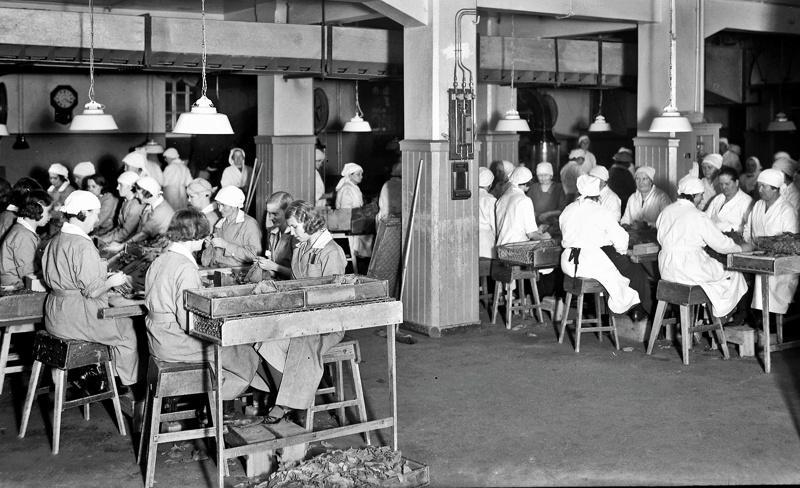 Strengbergillä  savukkeita valmistaneet naiset  istuivat pitkien pöytien äärellä. Jokaisella oli oma kolmisivuinen puulaatikko, mihin hylsyt oli laitettu. Tupakkaa tuotiin joka aamu nk tupakkaputkasta ja tupakkasekoitus oli valmiiksi lajiteltu peltilaatikkoihin.