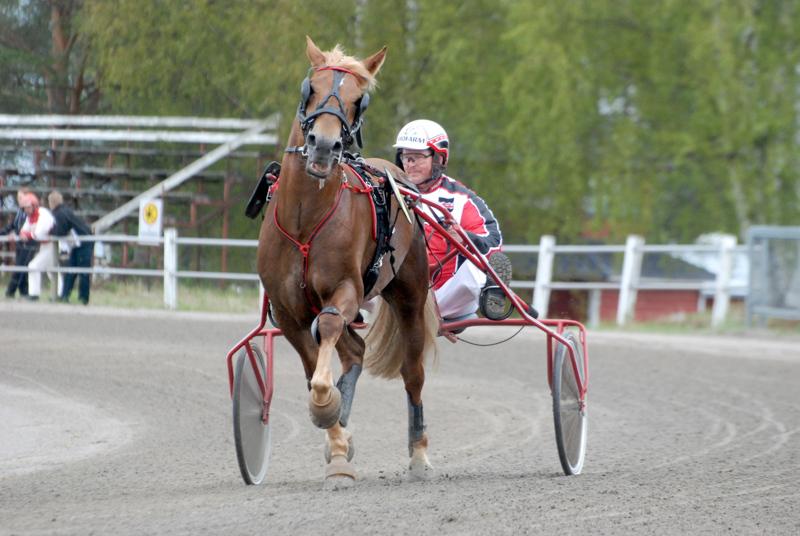 Pauli Raivion Ellin Sisu on pelihevosia lauantaisessa Pelimanni-ajossa.