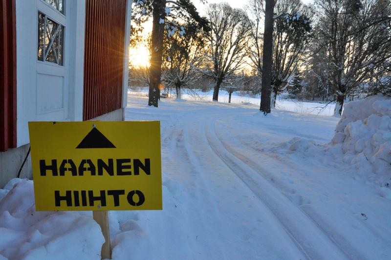 Perhon perinteinen haanen hiihto korvattiin tänä vuonna kuntienvälisellä hiihtokampanjalla.