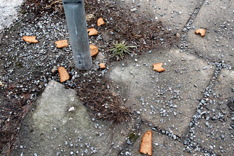 Ruokaa maahan ripotellessa ei varsinaisesti syyllisty ympäristörikokseen. Ihmiselle tarkoitetut elintarvikkeet houkuttelevat nopeasti puoleensa suuret lintuparvet sekä rotat.