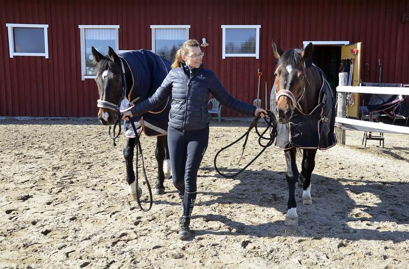 Hevoset ovat tavoitteellinen harrastus Johanna Rauhalalle.