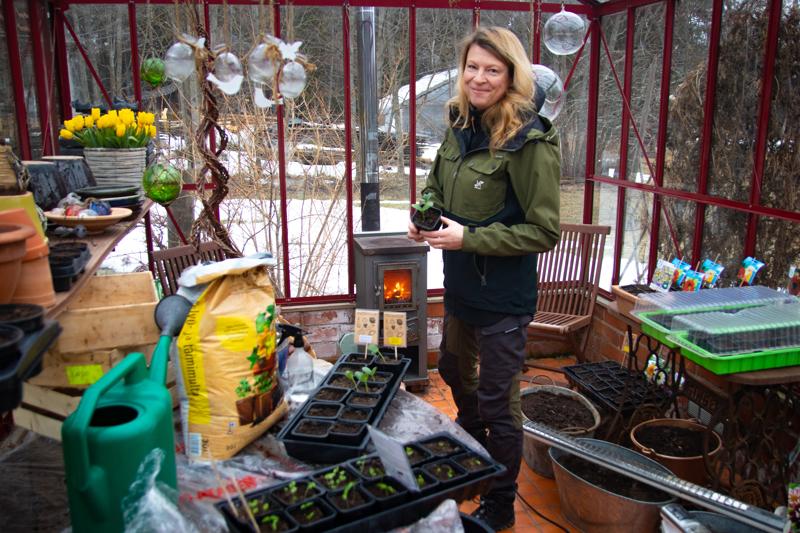 Puutarhuri ja floristi Ann-Mari Pihlajamäki toteaa, että  yrtit ovat hyvin onnistumisvarmoja kasvatettavia, vaikka puutarhatöistä ei olisikaan ennestään kokemusta.