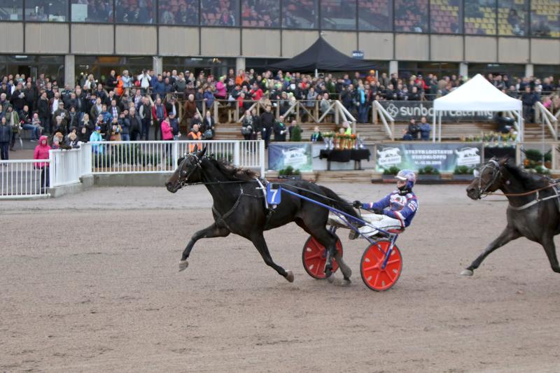 Kalajokisen Petri Saaren osaomistama North Lexus kohtasi lauantaina Porissa avoimen sarjan hevosia Kultaloimessa.