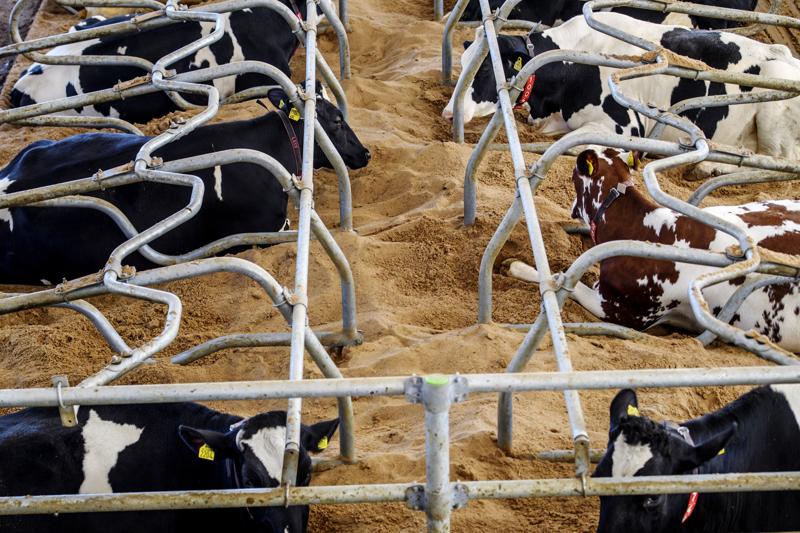 (Arkistokuva) Tukien myötä on voitu investoida tuotantohygieniaan sekä eläinten hyvinvointiin  merkittävästi.