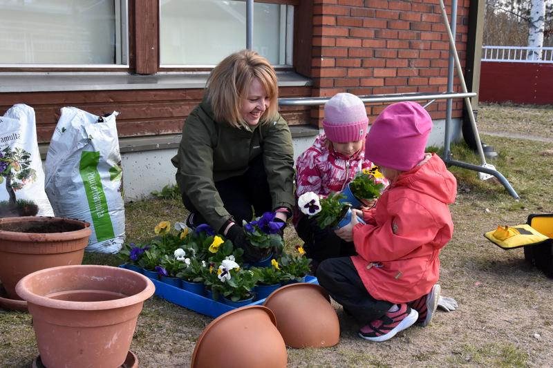 Orvokkipäivä. Anne Jääskä auttoi Erin Salmelaa ja Sofia Ilolaa orvokkien istuttamisessa.