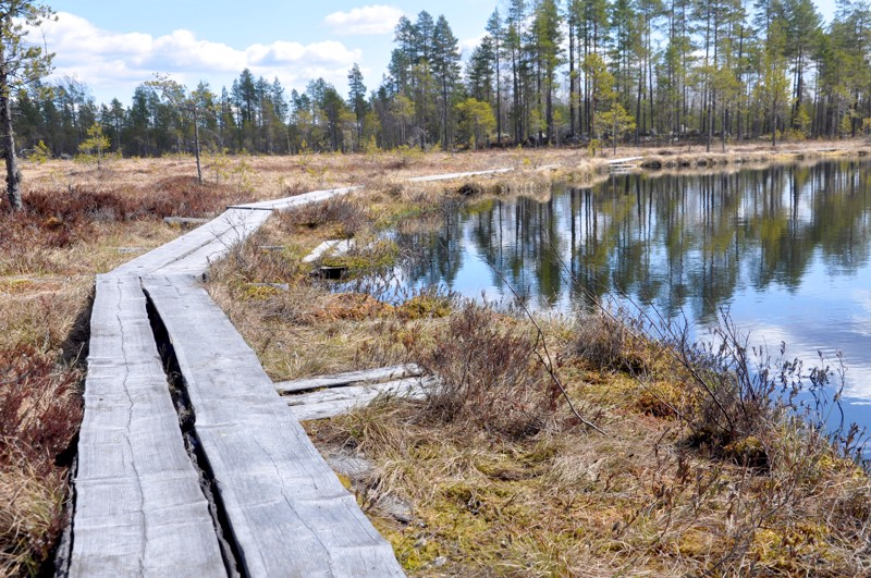 Koirasalmen ja Sysilammen ympäristön pitkospuita kunnostetaan noin kahden kilometrin matkalta.