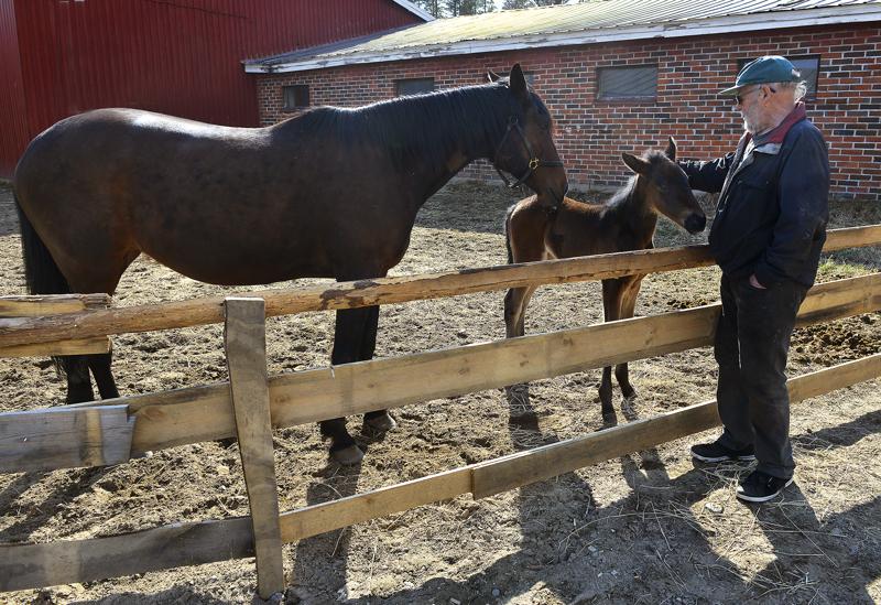 Liedesten hevostallilla Halsualla on ollut hevosia kolmekymmentä vuotta, eikä vastaavaa tapahtumaketjua ole aikaisemmin koettu.