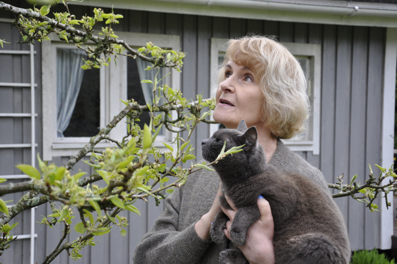 Ritva Tilvis ja perheen kissa toteamassa maanantaina, että päärynäpuu saattaa puhjeta kukkaan nimipäivän kunniaksi.