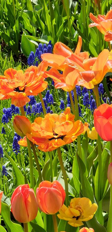 Puiston kukkia.