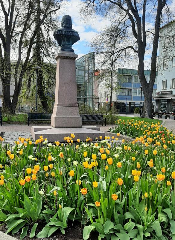 Tulppaanit kukkivat.