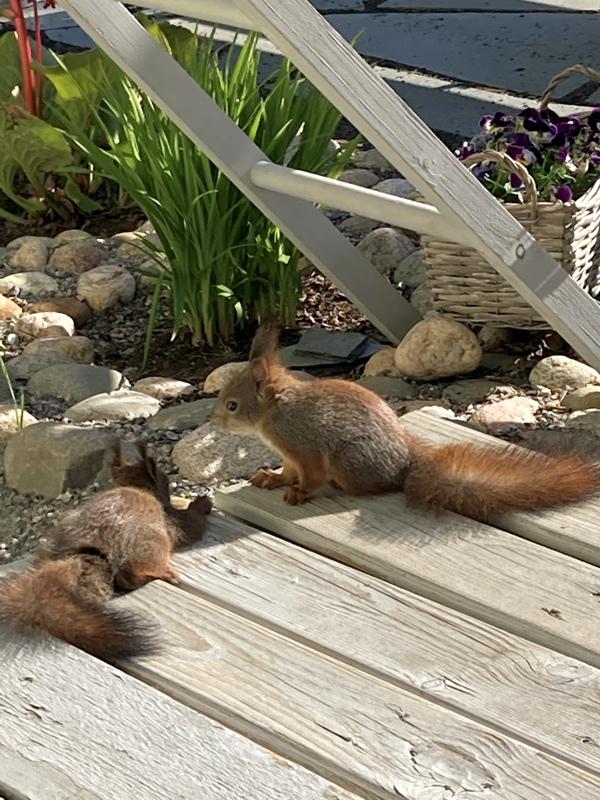 Oravanpoikaset.