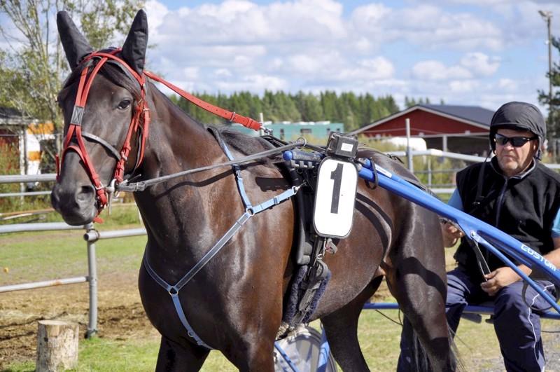 Pekka Visuri on viritellyt Amanda Rosen hurjaan iskuun.