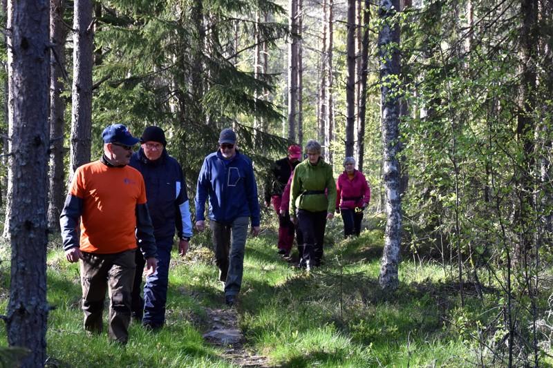 Näitä polkuja tallaan. Polkuperjantai virittää sakin sopivasti viikonloppuun. Aimo Pennanen johti joukkoa Pirttijärvellä.