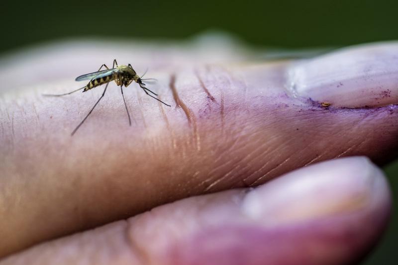 Hyttysenpuremia ei kannata raapia.