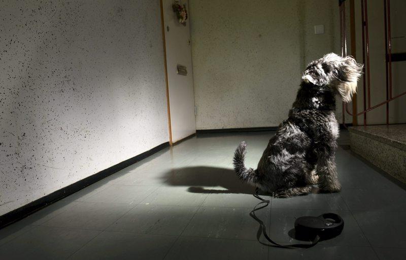 Eroavat parit kiistelevät koirista yhä useammin ja jopa käräjillä asti.